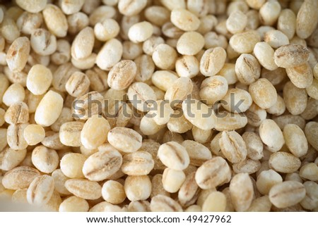 A close up shot of barley, selective focus. - stock photo