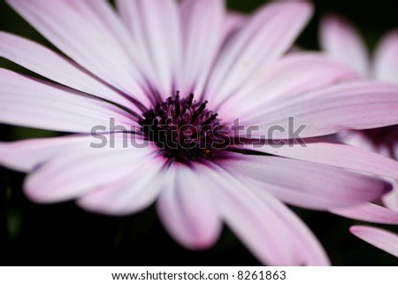 A close up shot of beautiful flower - stock photo