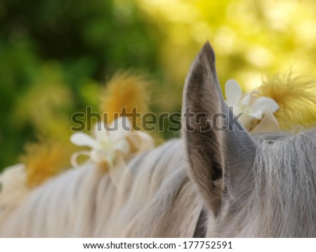 A close up shot of the mane of a horse decorated with flowers with a shallow depth of field. - stock photo