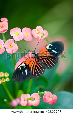 A close up view of a beautiful butterfly vertical - stock photo