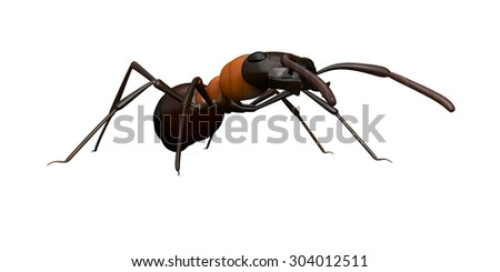 A close up view of an ant isolated on a white background