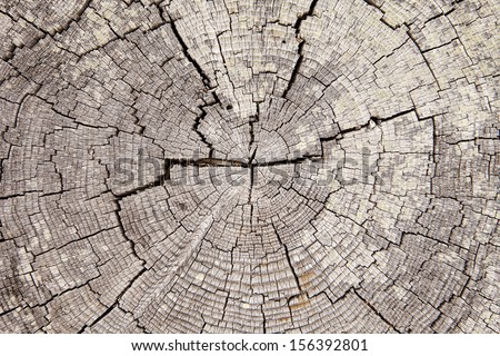 A close up view of an weathered old driftwood stump that shows the radial pattern of tree rings punctuated by a series of cracks spreading from the center. - stock photo
