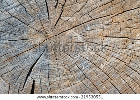 A close up view of an weathered old wood trunk that has a radial pattern of cracks from the center - stock photo