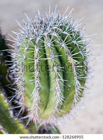 A closeup of a cactus with thorns - stock photo