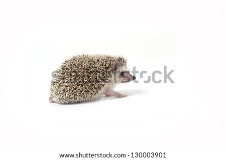 A closeup of a cute little hedgehog isolated on white - stock photo