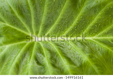 A closeup of a leaf with water drops.  - stock photo