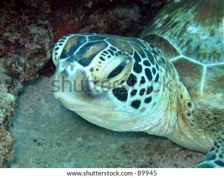 A closeup of a Turtle - stock photo