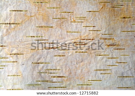 A closeup of birch bark for use as a background. - stock photo
