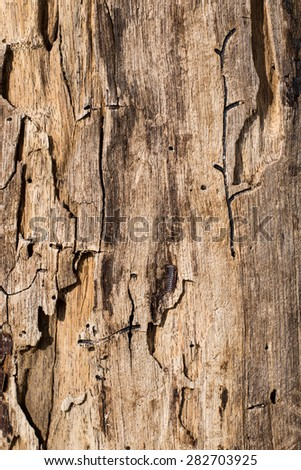 A closeup of textured rustic piece of wood - stock photo