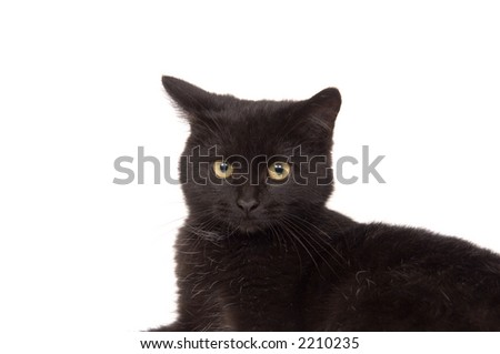 A closeup of the face of a black cat