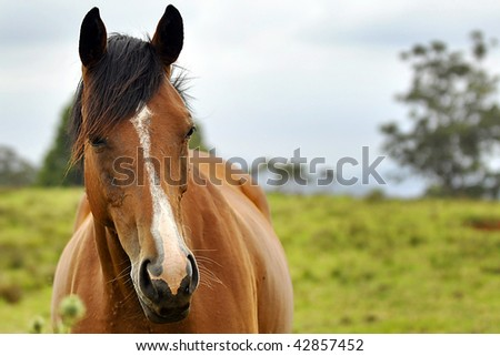 A Closeup Photo of a Brown Horse - stock photo