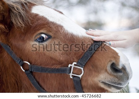 A closeup portrait of the head of a beautiful brown horse - stock photo