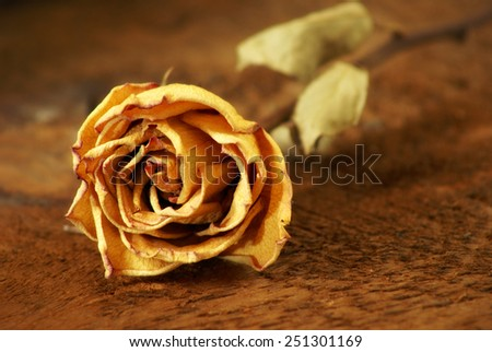 A closeup shot of a dried rose laying on some textured wood. - stock photo