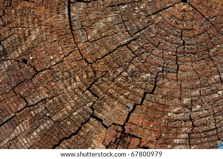 A closeup shot of a wooden log, showing the concentric circles. - stock photo