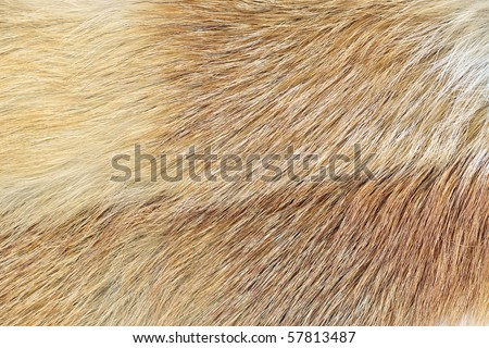 A closeup shot of mink fur. Great background, texture or wallpaper - stock photo