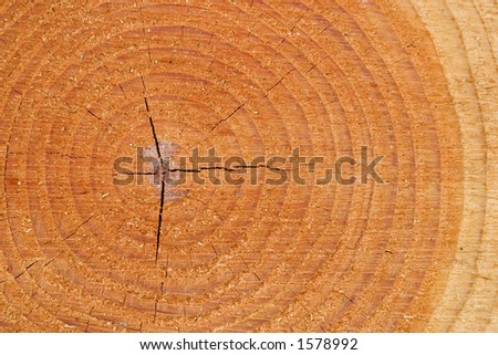 A closeup shot of tree growth rings in a pine tree - stock photo