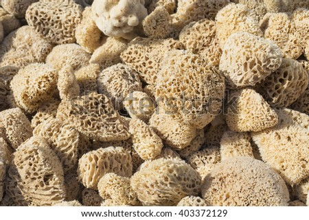 A closup of a natural sponges