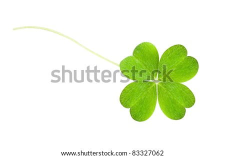 a clover isolated on white - stock photo