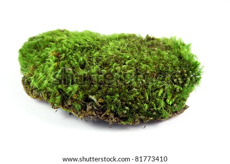 A clump of green moss shot on a solid white background. - stock photo
