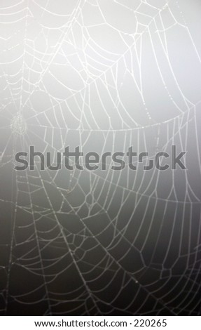 A cob web as seen in the early morning mist - stock photo