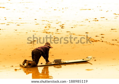 A cockle farmer sitting on the board while collect cockles from the sea in Phetchaburi  province ,Thailand - stock photo