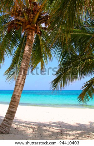 A coconut palm on the beach and sea background - stock photo