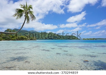 A coconut tree leaning over shallow water of the lagoon with the coast and an islet in background, Huahine island, Pacific ocean, French Polynesia - stock photo