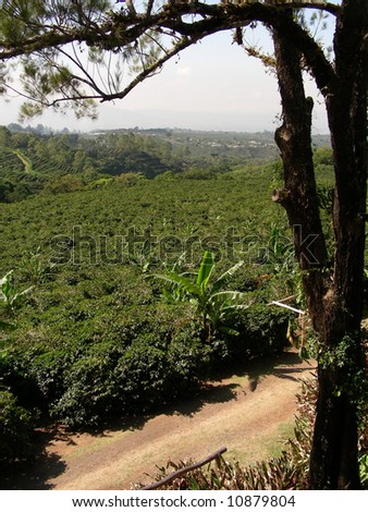 A coffee-plantation on the wat to vulcan Poas in Costa Rica - stock photo