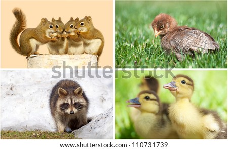 A collage featuring cute, young animals in the wild. - stock photo