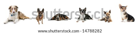 a collage of a variety of dogs on white - stock photo