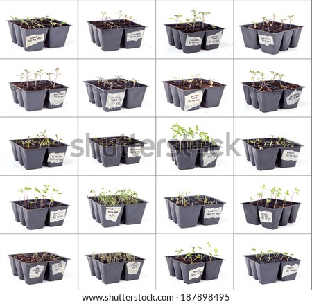 A collage of many seed cell packs with young sprouts in a grid formation on a white background. - stock photo