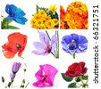 a collage of nine pictures of different flowers - stock photo