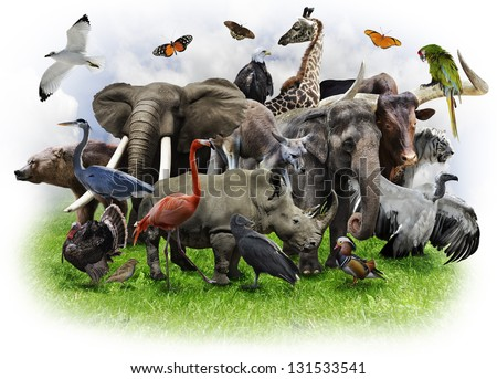 A Collage Of Wild Animals And Birds - stock photo