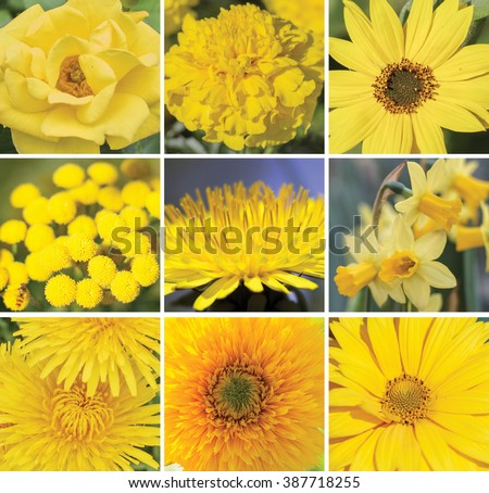 A collage of yellow flowers