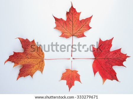 A collection beautiful colorful autumn leaves isolated on white background - stock photo