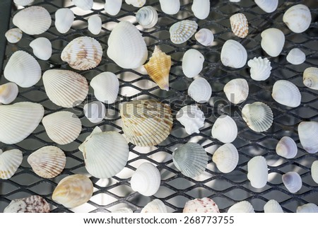 A Collection of Assorted Seashells - stock photo