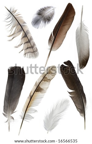 a collection of bird feathers on white - stock photo