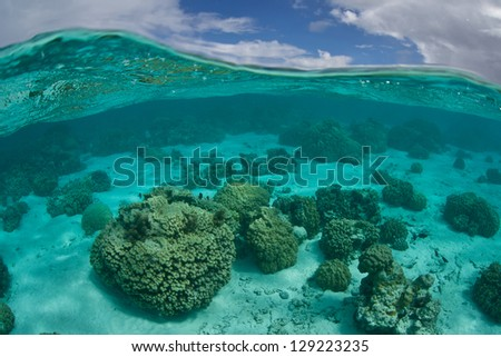 A collection of colorful coral colonies grow on a sandy bottom near the islands of Raiatea and Tahaa in French Polynesia.  This region is the essence of tropical beauty. - stock photo