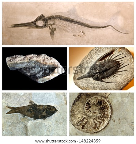 A collection of in-situ vertebrate and invertebrate fossils from around the world, including USA, Mexico, Germany and Morocco  - stock photo