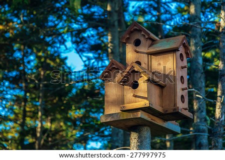 A collection of rustic wooden birdhouses on a tree in a spruce forest.