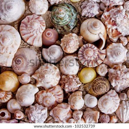 A collection of seashells for backgrounds - stock photo