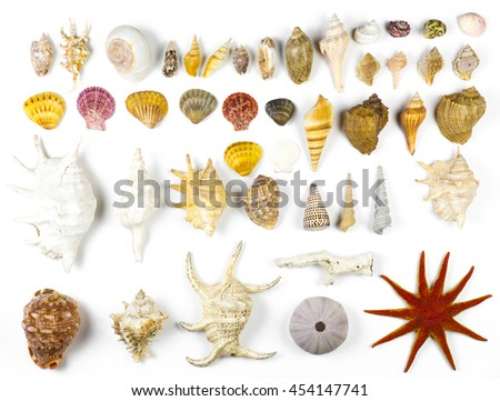 a collection of seashells isolated on a white background - stock photo