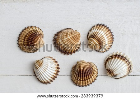 A collection of seashells on a white  background. From above - stock photo