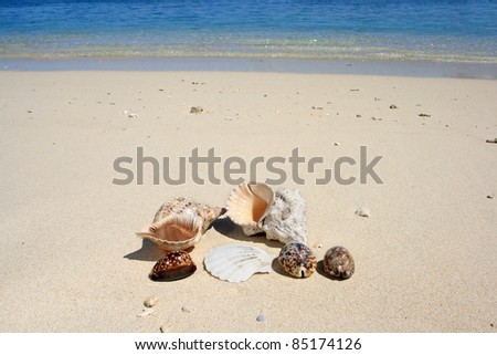 A collection of seashells on the beach with blue sea in the background.
