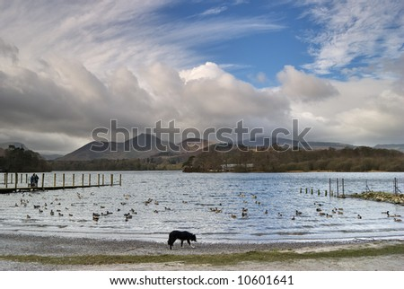 A Collie walking along the shore of Derwentwater in the English Lake District - stock photo