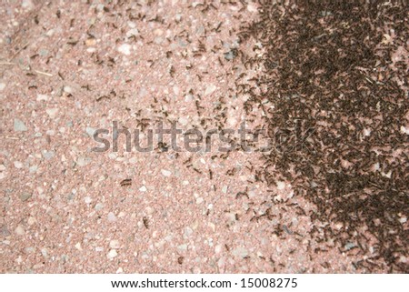 A colony of tiny ants swarming an area of the patio stone.  It looks like coffee grounds. - stock photo