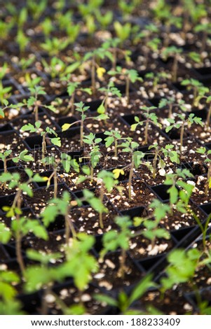 A color image of seedlings on an organic farm.