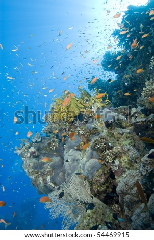 A colorful and vibrant tropical reef scene with sunrays in the background. Temple, Sharm el Sheikh, Red Sea, Egypt.