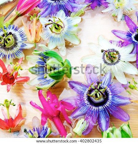 A colorful arrangement of Passiflora also known as Passion Flower, top view  - stock photo