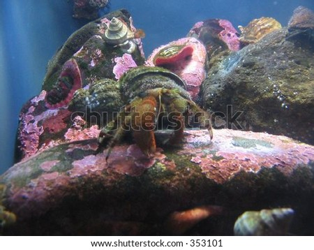 A colorful crab is one of the many creatures at the Oregon Coast Aquarium. - stock photo